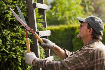 Potatura di piante e alberi ad alto fusto